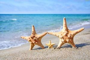 235072_lato-muszle-morze-rozgwiazdy-plaza